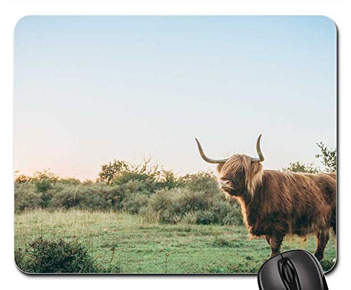 Mouse Pad - Horn Brown Animal Cattle Green Grass Nature