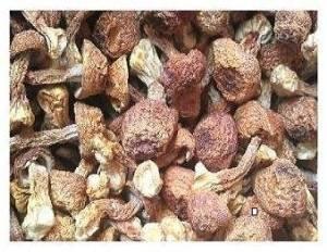 Dried Agaricus Blazei Premium Grade 320 Gram by Himalayas Mushroom & Truffles