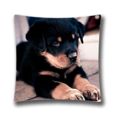 16X16 Inch (Twin Sides) Cute Rottweiler Puppy Personalized Square Throw Pillow Case Attractive Decor Cushion Covers,DIC33424