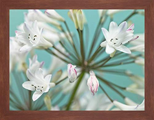 African Lily by Assaf Frank - 19
