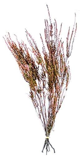 SuperMoss (27605) Dried Flowers - Erica, Pink, 3.5oz - Dried Flowers Centerpiece