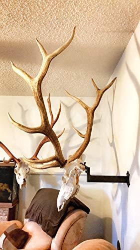 (Adjustable Bull Bracket European Elk Skull Hanger Mount Kit - for Elk, Moose, Caribou, Buffalo, Cattle, and Other Large Game - Worlds Strongest Holds Over 100 pounds - Oil Rubbed Bronze -Made in US.A)