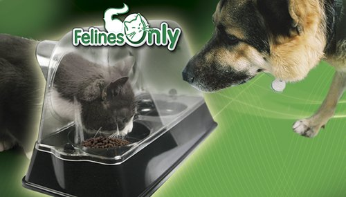 how to keep cat food away from dog
