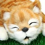 笑い転げる猫 イエロー