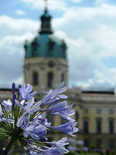 Home Comforts Peel-n-Stick Poster of Sky The Palace Charlottenburg Castle Monument Vivid Imagery Poster 24 x 16 Adhesive Sticker Poster Print