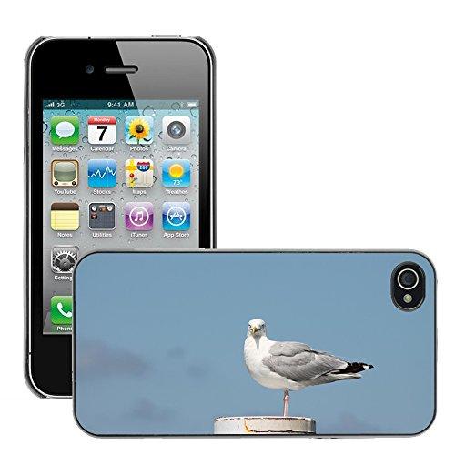 Bild Hart Handy Schwarz Schutz Case Cover Schale Etui // M00134464 Gull Vogel Tier // Apple iPhone 4 4S 4G