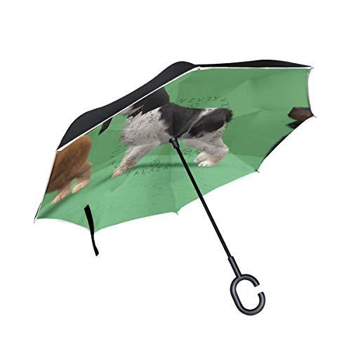 (All agree Inverted Umbrella A Trio of American Cocker Spaniels Reverse Umbrella UV Protection Windproof for Car Rain Sun Outdoor Black)