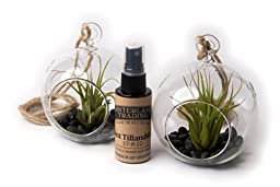 Air Plant Black Forest Set A, 2 Round Terrarium Combo Pack with 2 oz. Fertilizer