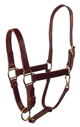 Hamilton 1-Inch Adjustable Leather Quality Halter with Snap, Average Size, Fits 800 to 1100-Pound, Burgundy