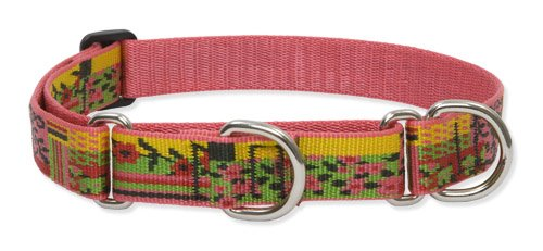 LupinePet 1-Inch Flower Patch 19-27-Inch Martingale Combo Collar for Large Dogs