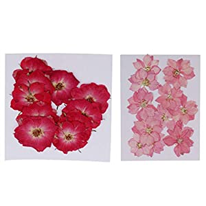 Prettyia 22 Pieces Pressed Natural Dried Flower Delphinium Rose Embellishment for DIY Phone Case DIY Handmade Home Ornament Craft 2-3cm 93