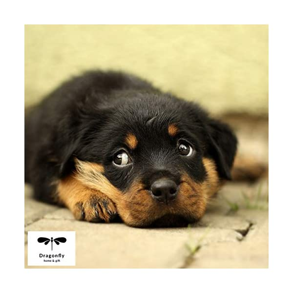 Dog Decor Rottweiler Wall Art - Quote Print (8.5x11 Unframed) | Pet Memorial Gifts | Dog Mom Gift | New Puppy Keepsake | Original Rottweiler Gifts for Dog Lovers 4