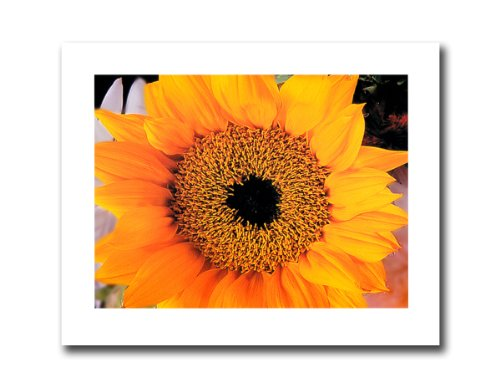 Yellow Sunflower Flower Photo Wall Picture 8x10 Art (8x10 Art Flower)