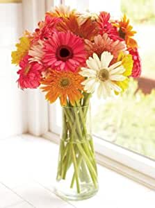 15 Stems Cheerful Gerbera Daisies