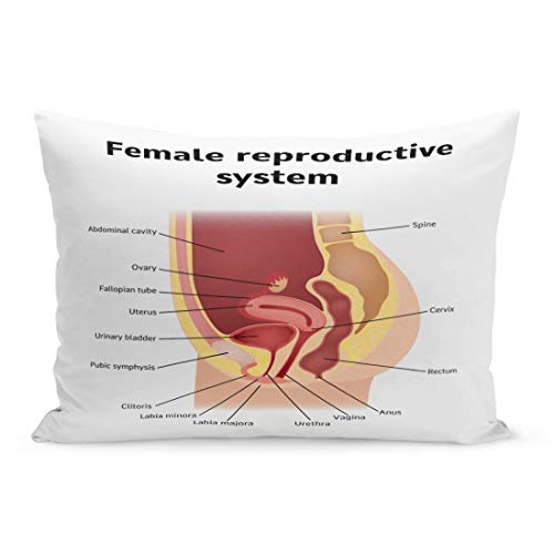 Semtomn Throw Pillow Covers Uterus Female Internal Genital Organs Sectional Structure of The Reproductive System Anatomy Pillow Case Cushion Cover Lumbar Pillowcase for Couch Sofa 20 x 36 inchs