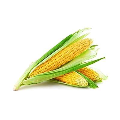 Golden Bantom Corn Seeds, 50+ Premium Heirloom Seeds, Sweet Corn, ON SALE!, (Isla's Garden Seeds), Non Gmo Organic, 85% Germination, Survival Seeds, Highest Quality, 100% Pure : Garden & Outdoor