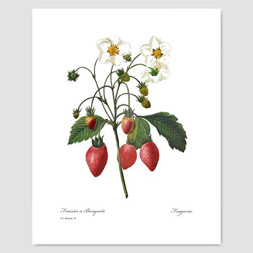 Strawberry Art (Red Wall Decor, Botanical Fruit, Kitchen Print) Pierre Redoute - Unframed
