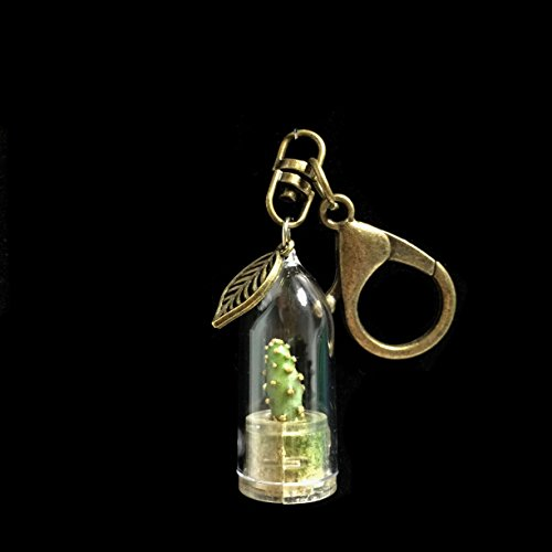 Live Cactus Keychain Wearable Miniature Bonsai Cactus Keychain Nature Terrarium