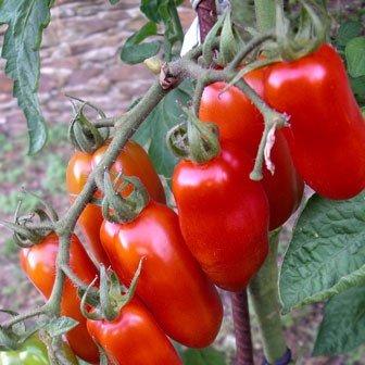 Tomato Seed San Marzano By Stonysoil Seed Company