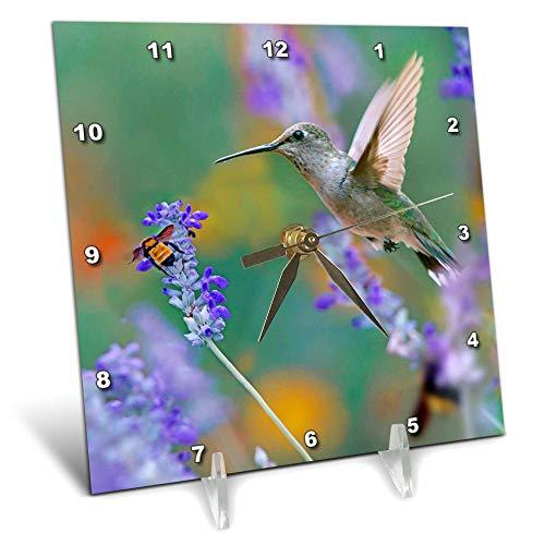 3dRose Danita Delimont - Hummingbirds - Female Black-chinned Hummingbird with Bumble bee, Texas, USA. - 6x6 Desk Clock (dc_315063_1)