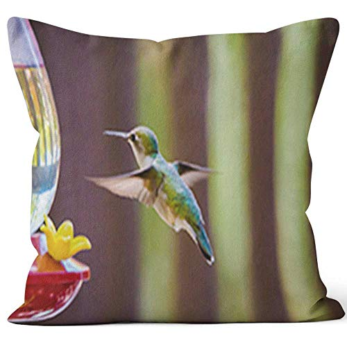(Nine City Hummingbird at The Feeder Throw Pillow Cushion Cover,HD Printing Decorative Square Accent Pillow Case,26