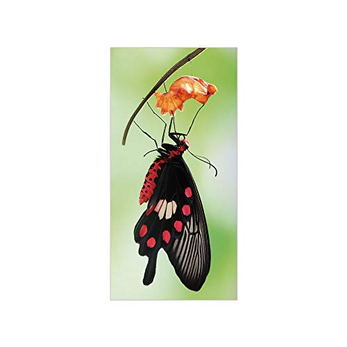 3D Decorative Film Privacy Window Film No Glue,Swallowtail Butterfly,Amazing Moment Coming Out of Cocoon Chrysalis Transformation,Red Black Green,for Home&Office