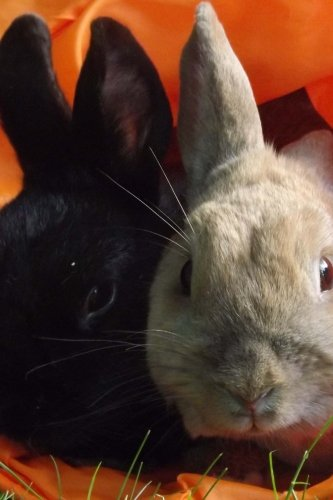 Pair of Rabbits in an Orange Bag Journal: Take Notes, Write Down Memories in this 150 Page Lined Journal ebook
