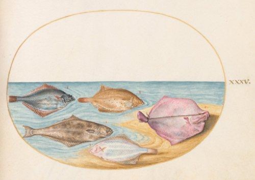 Artist  Joris Hoefnagel   Drawing  Animalia Aqvatilia Et Cochiliata  Aqva   Plate Xxxv   Date  C  1575 1580   Vintage Fine Art Print
