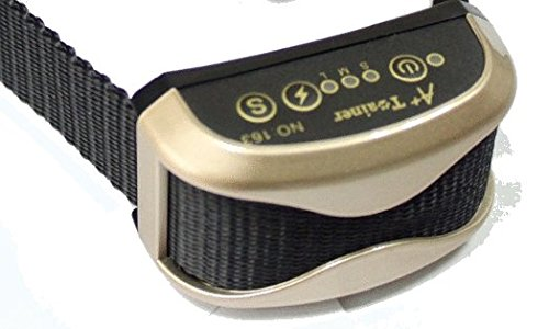 Best Rated Small Dog Training Collar