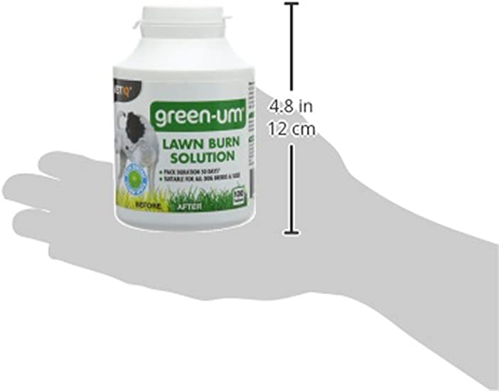 "Details about  /Vickerman 20/"" Green Salal Leaf Lemon Spray 4//Pk"