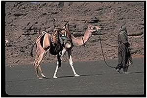 Photo Block Horse Landscape Tableau 40cmx 30cm - 2724820055894