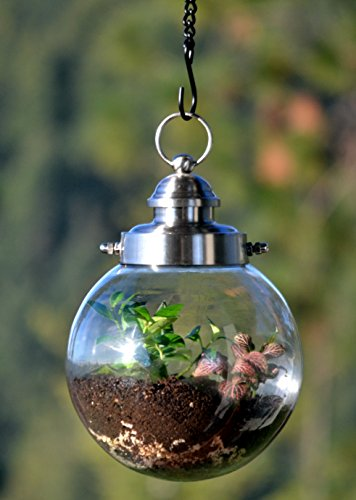 Single Globe Planter (H Potter Hanging Terrarium - Glass Globe Plant Container - Garden Gift)