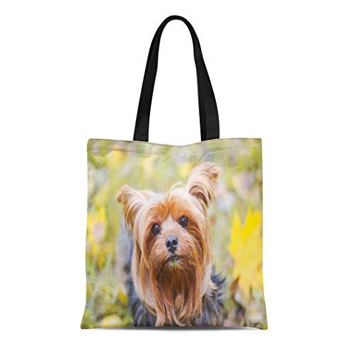Semtomn Canvas Tote Bag Green Adorable Yorkies in the Gold Autumn Orange Animal Durable Reusable Shopping Shoulder Grocery Bag