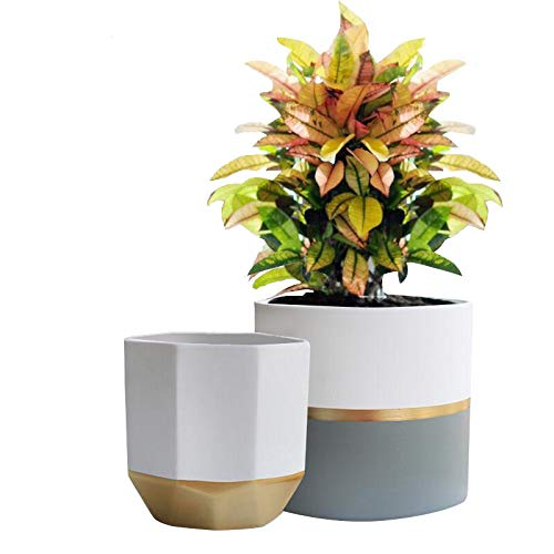 "White Ceramic Flower Pot Garden Planters 6.5"" Pack 2 Indoor, Plant Containers with Gold and Grey Detailing"