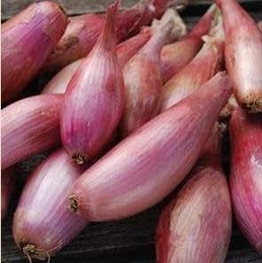 Onion Shallots Zebrune 1,000 seeds