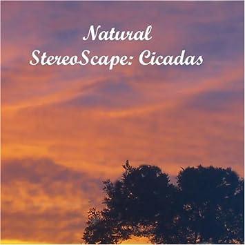 Natural StereoScape: Cicadas