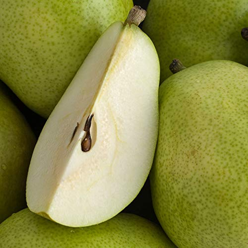 The Fruit Company Green d'Anjou Pears - 4 lbs (Typically 6) Premium Fresh Pacific Northwest Green D'Anjou Pears Packaged in a Reusable Watercolor Box Designed By Local Oregon Artist