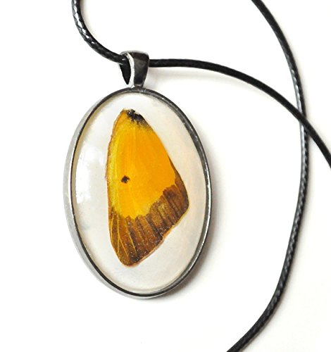 Orange Sulphur Butterfly in Resin Pendant - Colias eurytheme - Necklace - Nature Necklace - Forest Pagan Witchy Viking -