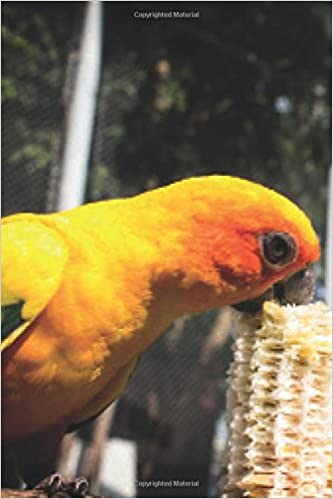 Amazon com: Exotic Birds January Notebook & Journal  Productivity