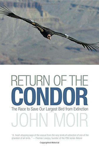 Return of the Condor: The Race To Save Our Largest Bird From Extinction PDF