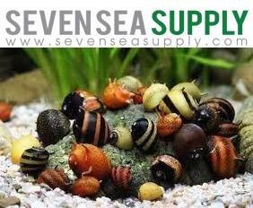 SevenSeaSupply 5 Horned Nerite Fresh Water Aquarium Snails (Best Snails For Freshwater Aquarium)
