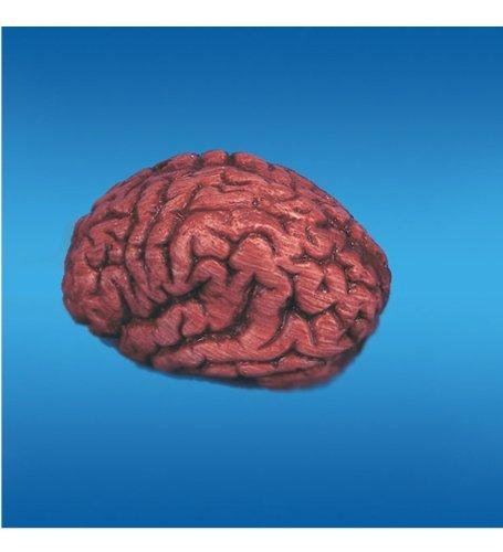 Bloody Brain -