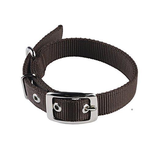 (Animal Collar - 26