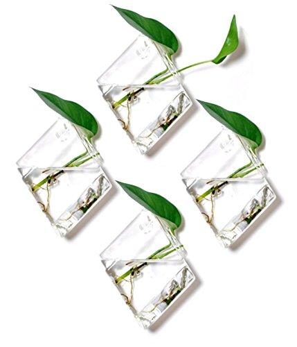 Glass Vases Containers - Set of 4 Glass Terrarium Hanging Wall Planters, Diamond Air Plants Succulent Container GeoTerrariums