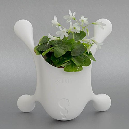 Livi Palm Pot - White - Indoor Suctioned Window/Wall Planter for Plants and Herbs … by Livi