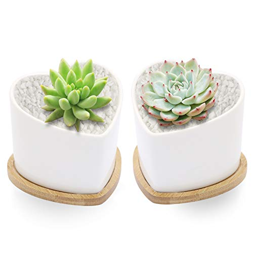 (Sqowl 2 Piece Love Heart Shape Planter 3.8 inch White Ceramic Succulent Planter Pots Modern Cute Small Cactus Herb Flower Planters Set with Bamboo Tray Indoor or Outdoor)