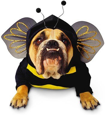 Bumble Bee Halloween Costume For Dogs - Bumblebee Dog Pet Pet Costume - Small