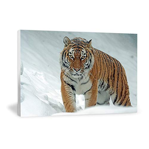 (OKCON The Siberian Tiger-Canvas Prints Wall Art Gallery Wrap Modern Home Decor-48 x32)