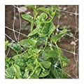 David's Garden Seeds Leafy Greens Spinach Green Malabar SL2438 (Green) 200 Open Pollinated Seeds