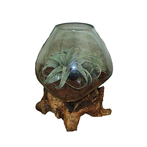 アジアンガラスと流木のプランターオブジェ Lサイズ 約 W=40cm×H=55cm B06XD8BGYM